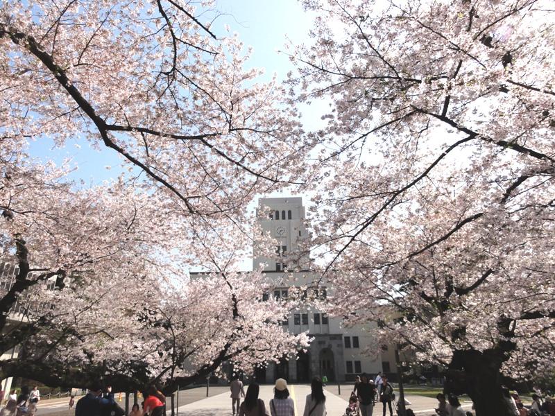 東工大桜 に対する画像結果