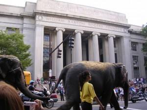 Circus Elephants, photo by Ono-san