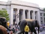 Circus Elephants 0017 (1024x768)