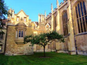 ケンブリッジ大学トリニティコレッジにあるニュートンのリンゴの木